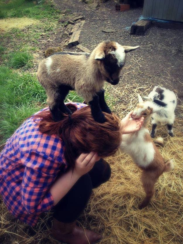 Justin Bieber Baby Goat Scream - Justin Bieber Age Baby