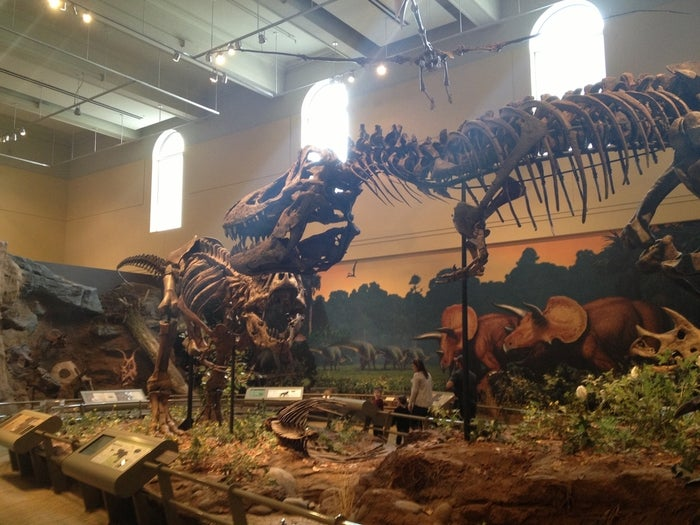 You can see this beast at the Carnegie Museum of Natural History, and the T-Rex isn't the only dinosaur holotype they have.