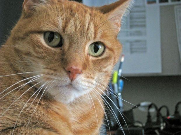 Electronic cat deterrents for gardens