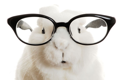 Glasses Frames Buzzfeed : 9 Rabbits Wearing Glasses