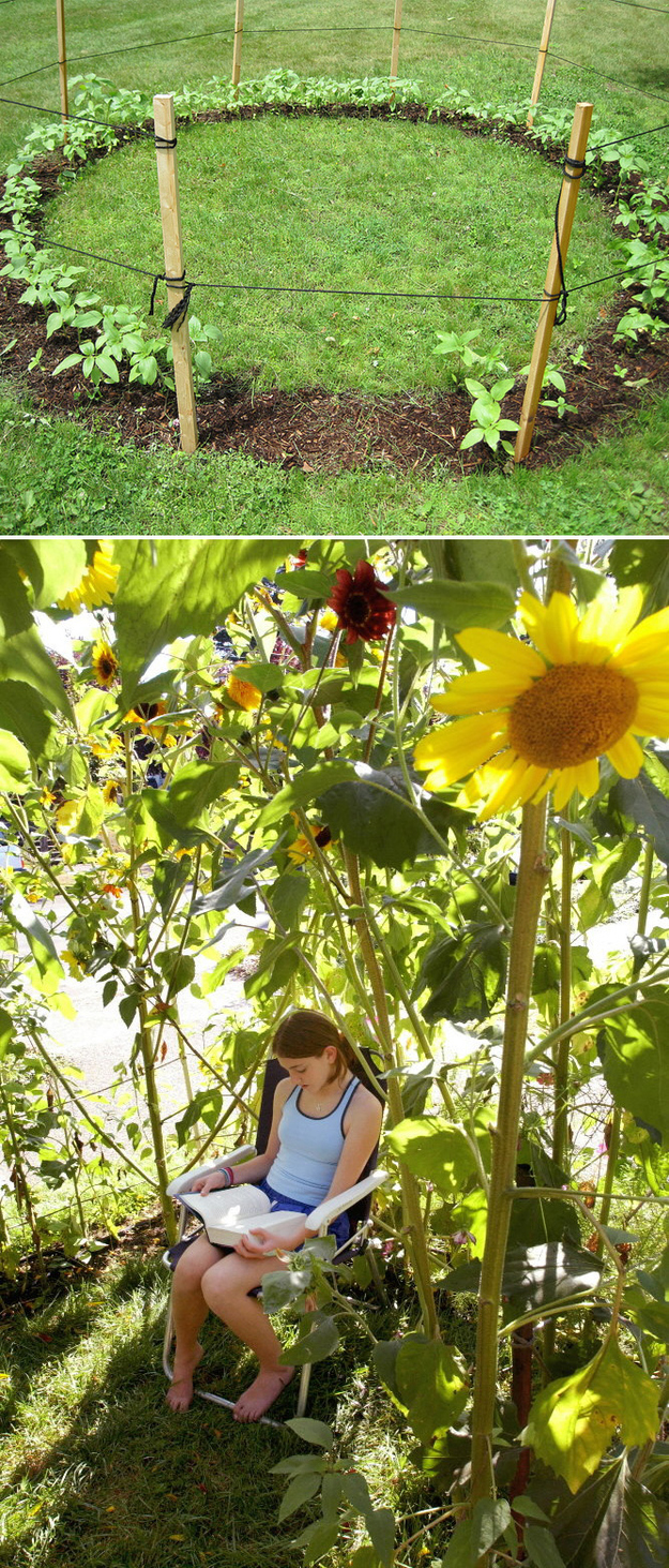 Grow a sunflower house for the kids to play in.