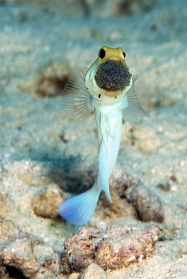 14 Aquatic Animals You Didn't Know Were Real