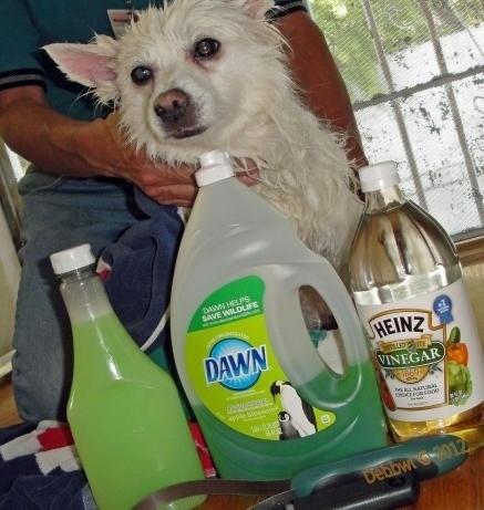 1 xícara de detergente, 1 xícara de vinagre, e 1 litro de água morna. Massageie e deixe descansar por cinco minutos. Segundo um depoimento: 'As pulgas simplesmente flutuaram na água e morreram e o melhor de tudo é que a Libby não teve qualquer reação.'