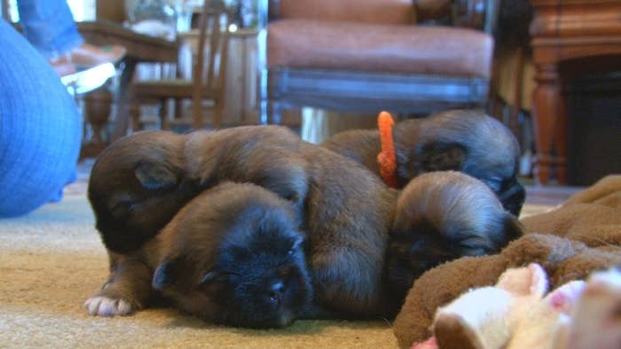 They don't have names yet, they just go by the color of their collars.