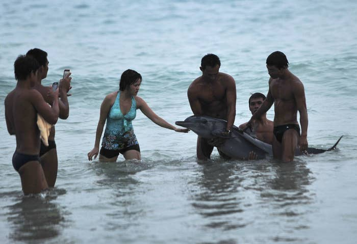 "Tourists take pictures with an injured, stranded dolphin at a beach in Sanya, Hainan province, June 16, 2013. Before animal rescuers arrived the dolphin was raised in and out of the water for tourists to have pictures taken with it, the animal died soon after, reported local media. Local wildlife experts blasted the tourists for ""hampering the efforts of people trying to save the mammal."" (Reuters/Stringer)"