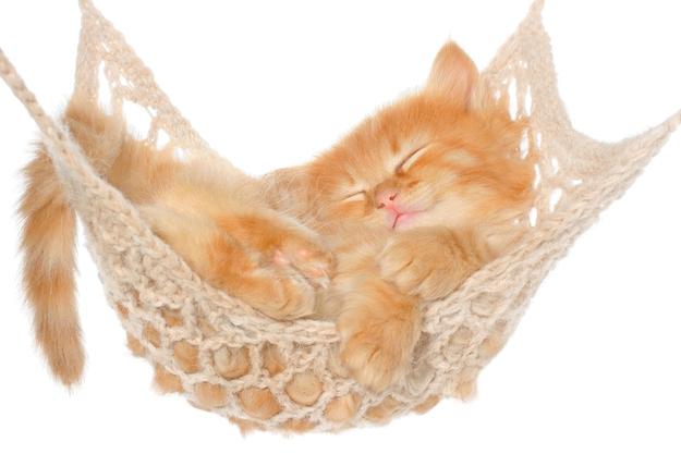 Fall asleep in a hammock.