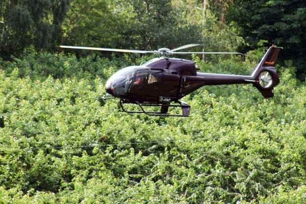 Cherry farmers hire helicopter pilots to air-dry their trees after it rains so that the cherries don't split open.