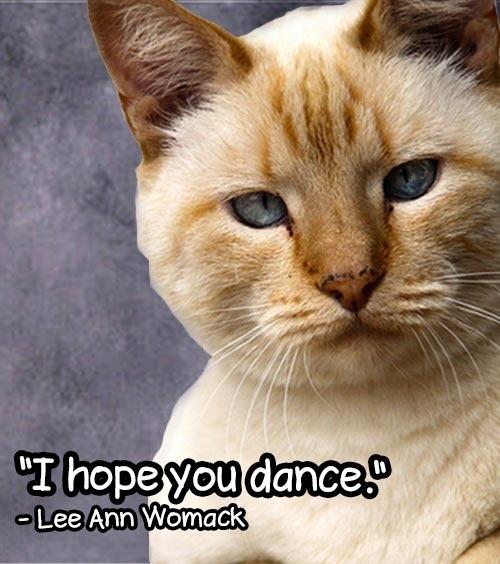 Senior Cat Quotes