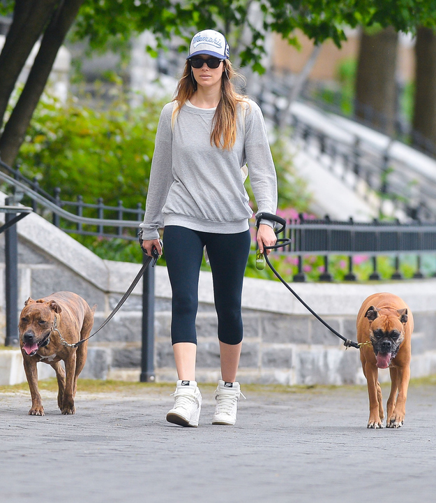 Just Walking The Dogs Livingston