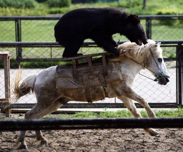 Animals Riding Other Animals