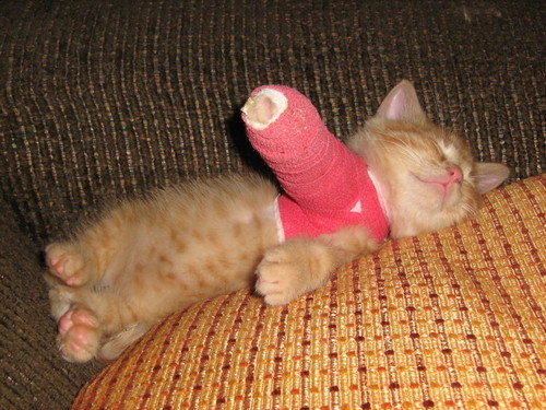 Cat With A Cast