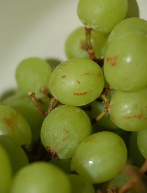 Smiley Grape