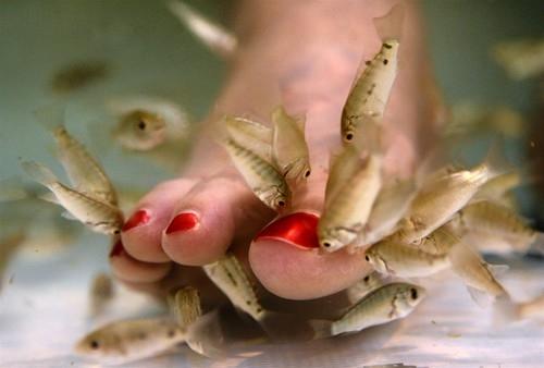 Fish-y Pedicure