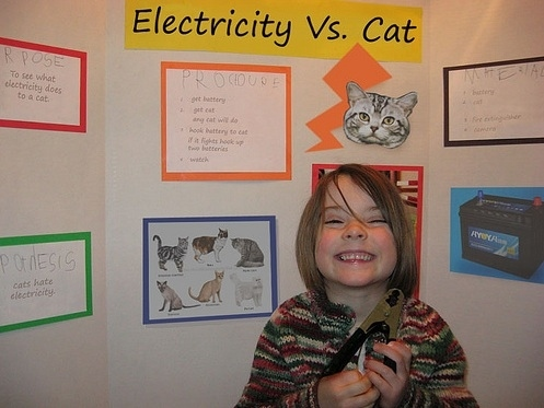 Electricity Vs. Cat