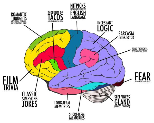 Standard Brain Map
