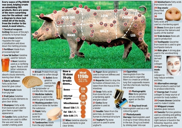 40 Other Things To Do With A Pig