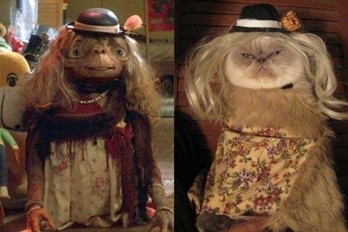E.T. Kitty