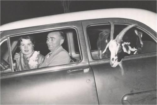 Old-Timey Couple With Backseat Goat