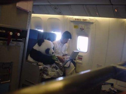 Exit Row Panda
