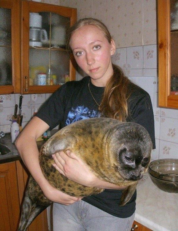 Seal as a Pet