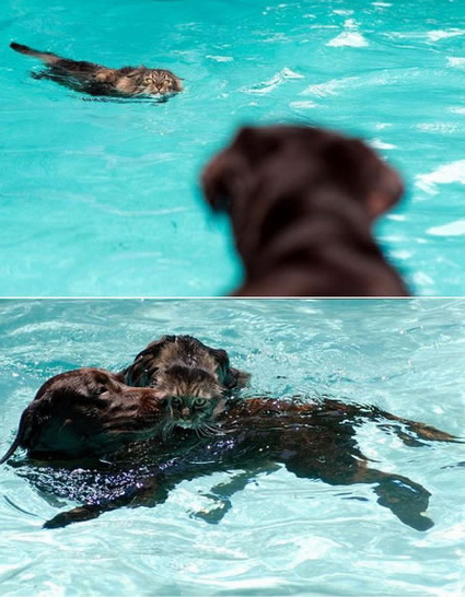 Cat and Dog in a Pool
