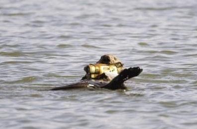 Otter-Cam