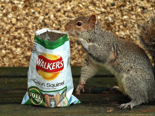 Cajun Squirrel