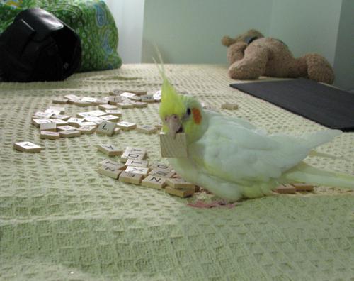 Scrabble Bird