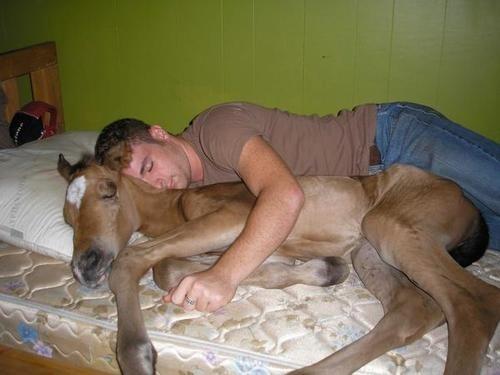 Horsey Snooze