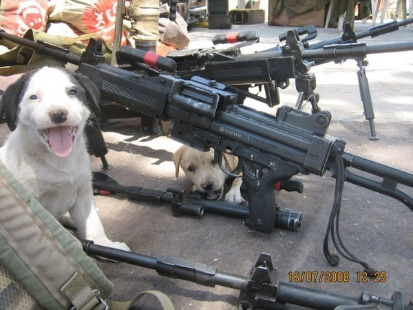 Puppy Militia