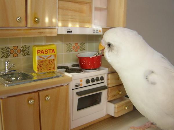 Japanese Bird Cooking Spaghetti