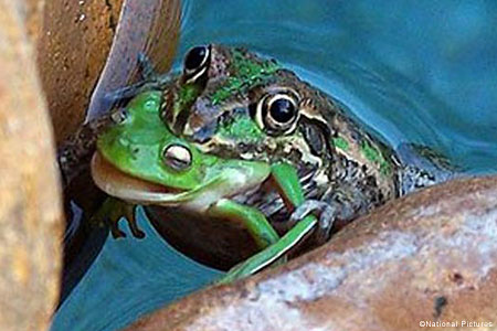It's a Frog-Eat-Frog World
