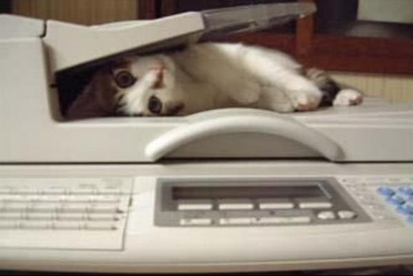 Faxing a Cat