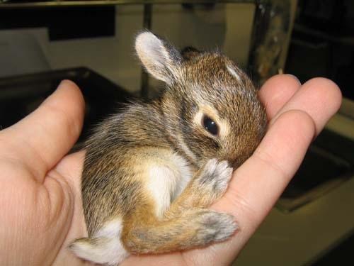 Tiny Tiny Bunny