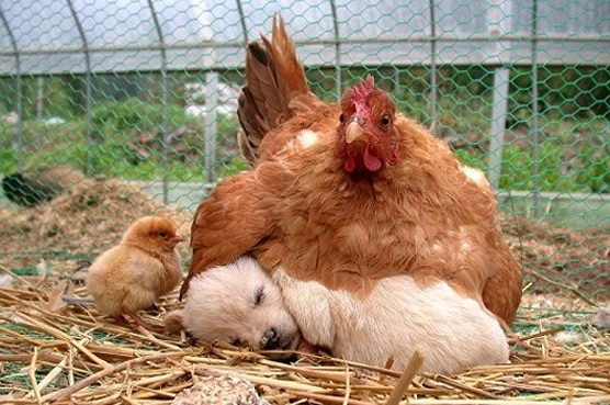 Puppy, Newly Hatched