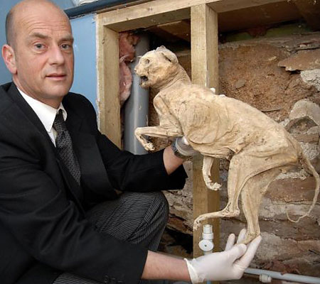 Funeral Director Finds 400-Year-old Cat