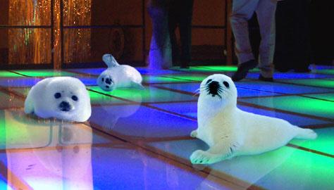 Clubbin' Baby Seals