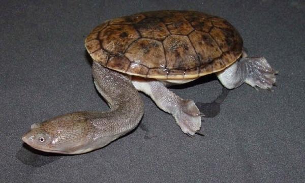 Broken Turtle Mystery