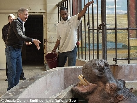 Harrison Ford Feeds A Hippo