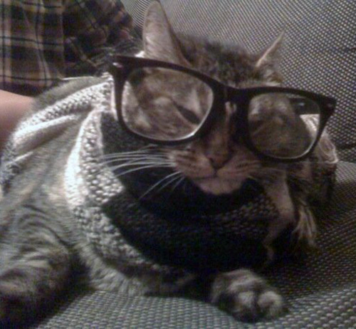 F*cking Hipster Cat