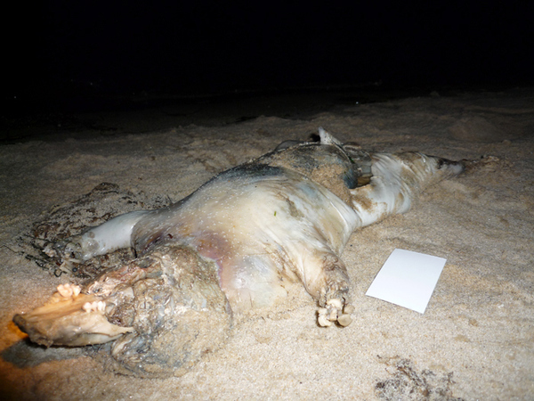Is the Montauk Monster Back?