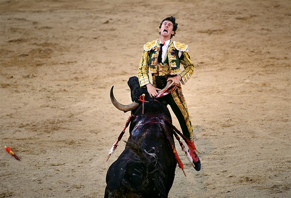 Matador Gored by Bull