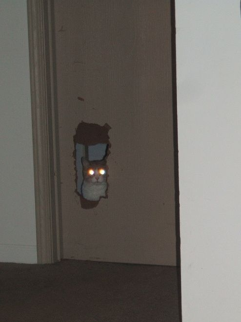 Laser Cat Makes His Own Pet Door