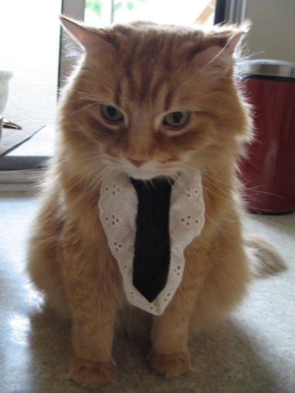 Ties For Cats