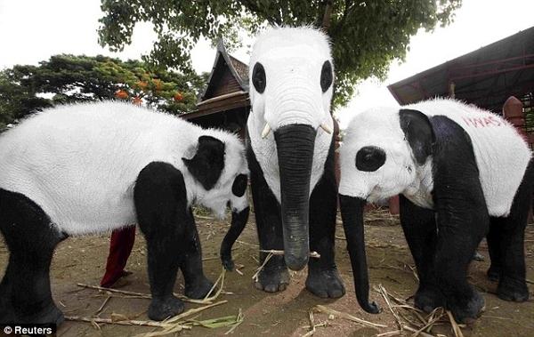 Elephant Pandas