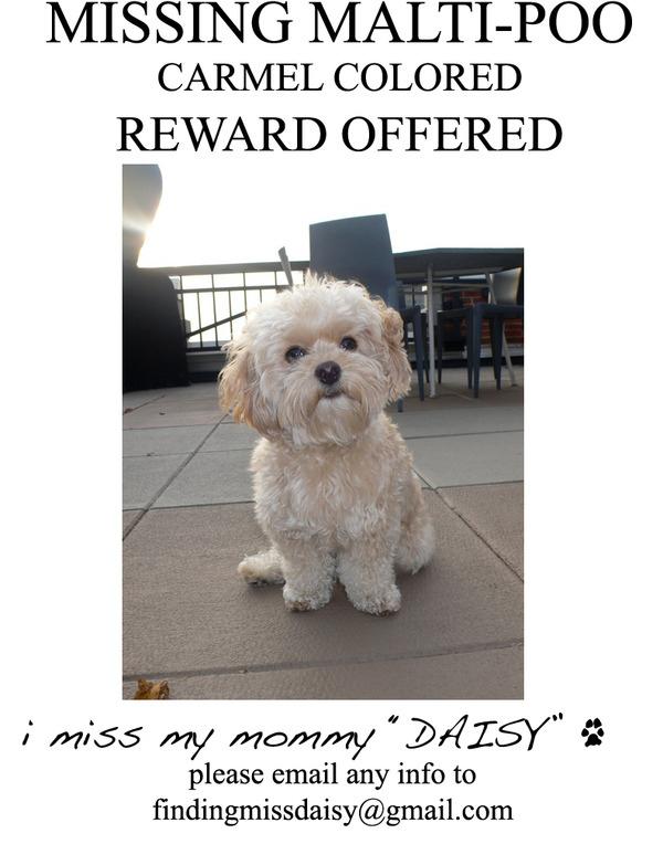 Lost: Jessica Simpson's Dog