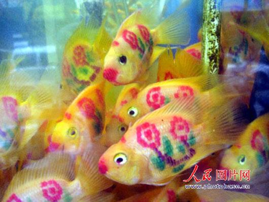 Tattooed Fish