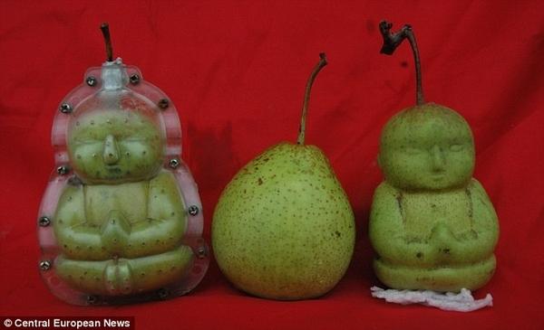 Baby Buddha Pears