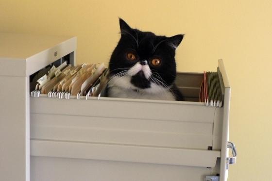 Cat In A Filing Cabinet
