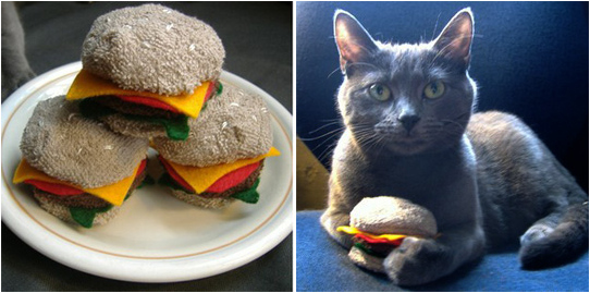 Cat Actually Can Haz Cheezburger